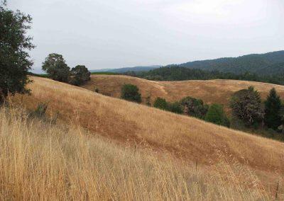 Mendo Grassland